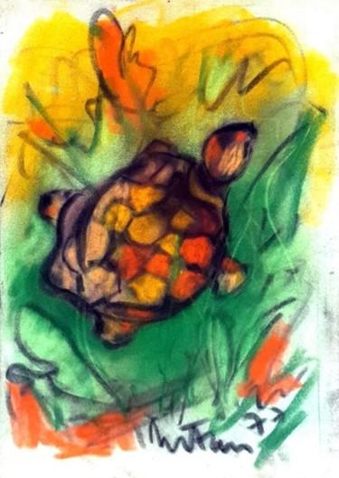 tartaruga sacra